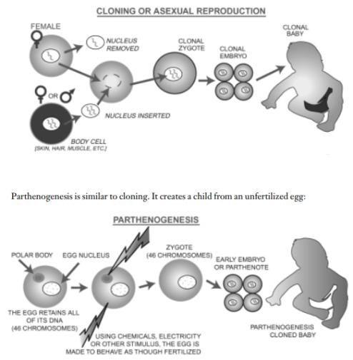 clonacion partenogenesis