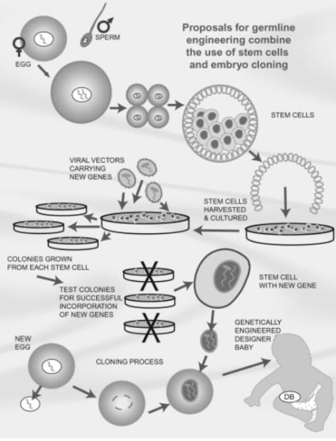 modificacion genetica hereditaria